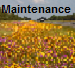 Maintenance Specifications